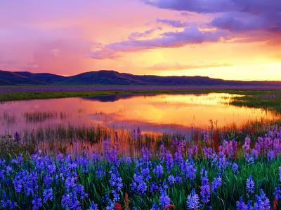 Camas Prairie Landscape Idaho long goodbye